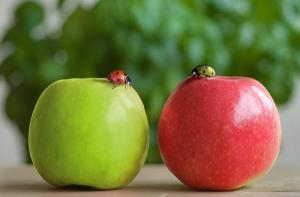 Зеленые и красные яблоки отличия